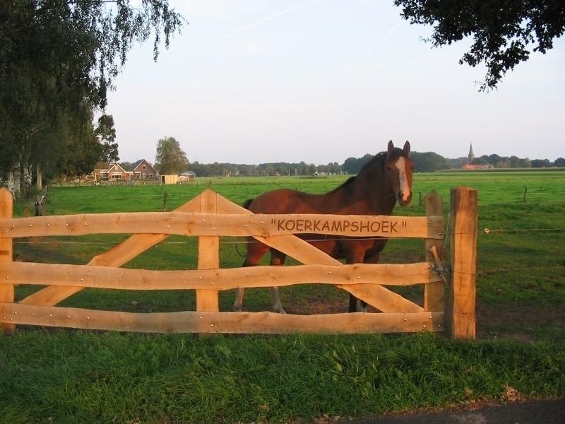 9. Pony